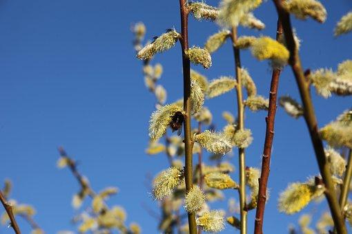 Spring, Verba, Bumblebee, Bloom, Insect, Pollen