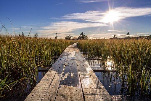 Path, Hiking, Crossing, Trail, Footbridge, Foot, Floor