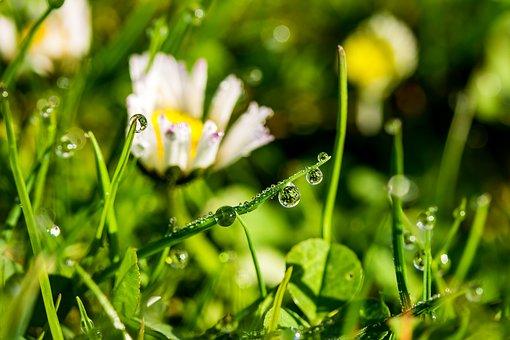 Drip, Raindrop, Dewdrop, Drop Of Water, Beaded