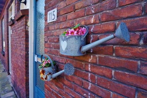 Holland, Netherlands, Amsterdam, Zaandam, Flower