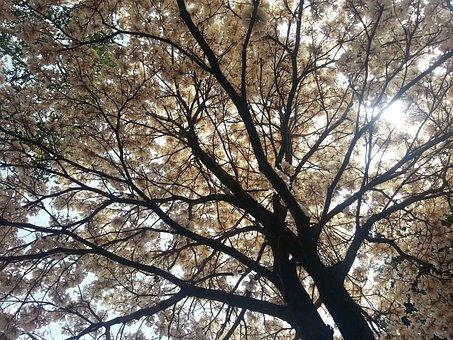Tree, Light, Ipê, Against Light, Foliage