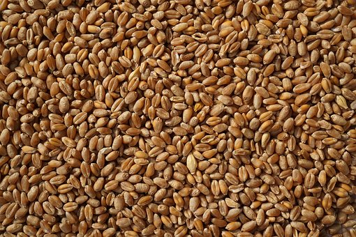 Wheat, Grain, Grains, Agriculture, Harvest