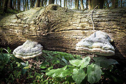 Forest, Log, Nature, Wood, Tree, Mushrooms, Moss