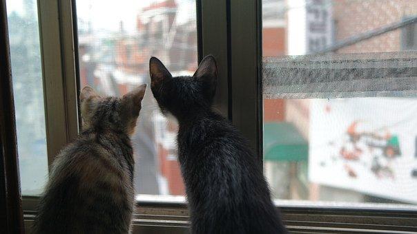Cat, Two, Kitten, Pet, The Black Cat