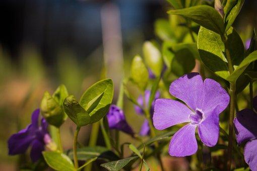 Purple, Flower, Green, Macro, Blossom, Bloom