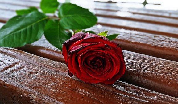 Red Rose, Rose Flower, Rose, Romantic, Beautiful Rose