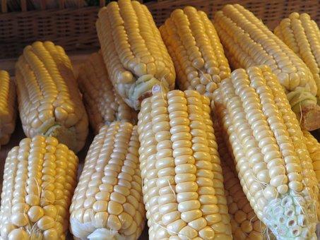 Corn, Corn On The Cob, Cereals, Food