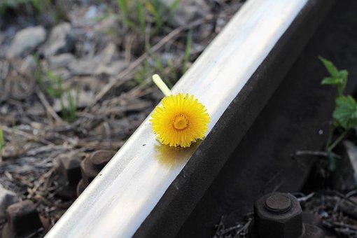 Railway, Flower, Dandelion