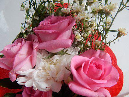 Flowers, Bloom, Rose, Pink, White, Nature, Floral
