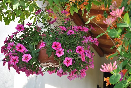 Flowers, Nature, Summer, Surfinie, Purple Flowers