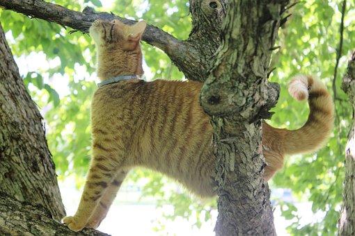 Kitty, Meow, Cats, Animals
