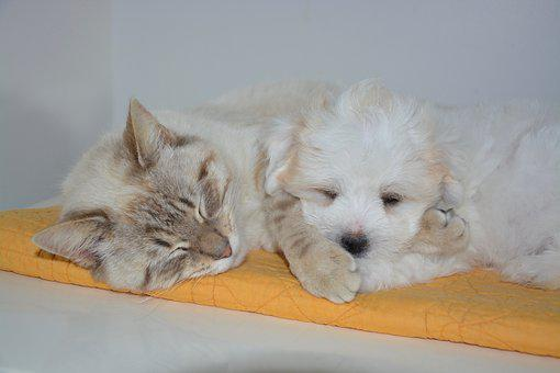 Cat, Dog, Nap