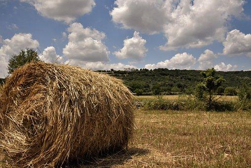 Barsento, The Countryside Of Puglia, Puglia, Apulia
