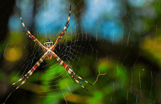 Spider, Web, Net, Nature, Insect, Spooky, Spiderweb