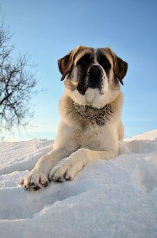 Dog, Pet, Sky, Portrait, Vigilant, Domestic Animal