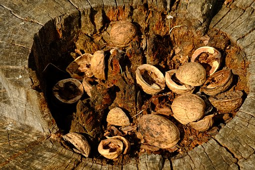 Nusschalen, Tree, Nuts, Nut, Shell, Nature, Walnut