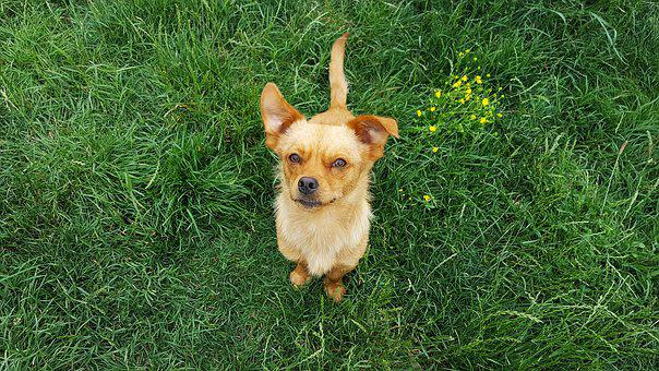 Dog, Young Dog, Doggy, Puppy, Funny Dogs, Yellow Dog