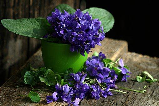 Violet, Still Life, Spring Flowers, 1