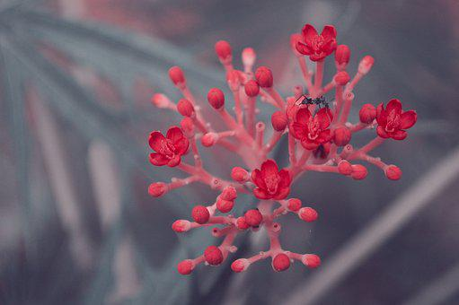Flower, Red, Bee, Nature, Plant, Floral, Garden