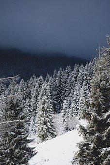 Winter, Snow, Christmas, Trees, Evergreens, Blizzard