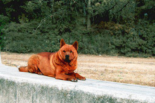 Dog, Pavement, Ruins, Trees, Zaculeu, Animal, Cute