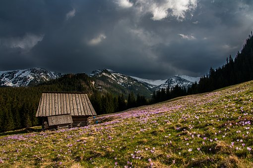 Hut, House, Cabin, Rustic, Woods, Field, Valley