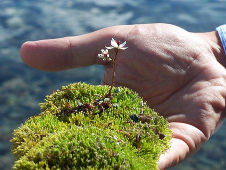 Moss, Flower, Delicacy, Plants