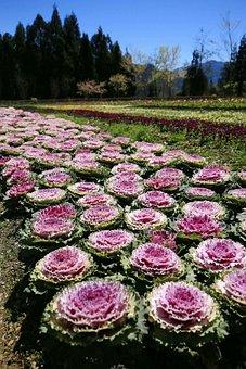 Taiwan, Mei Feng, Flowers And Plants, Beautiful Port