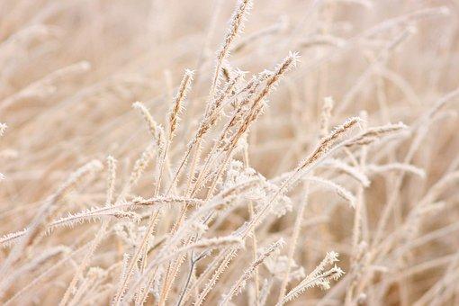 Grain, Winter, Cereals, Nature, Cold, Landscape, Frost