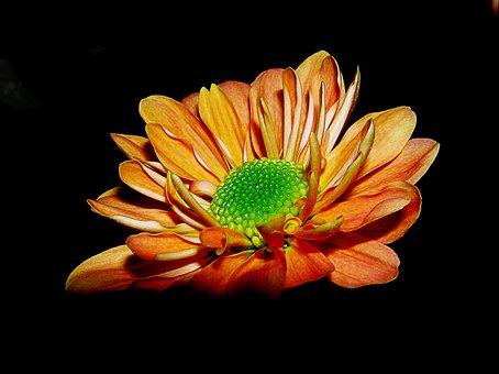 Nature, Flower, Floral, Blossom, Natural, Green, Leaf