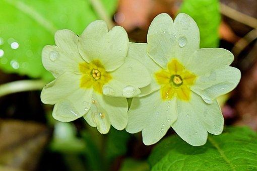 Flower, Mount, Macro, Nature, Flowers, Plants, Garden