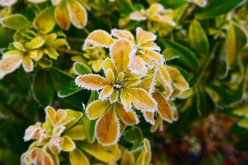 Frozen, Leaves, Frozen Leaves, Winter, Nature, Green