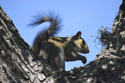 Squirrel, Wildlife, Rodent, Animal, Nature, Wild