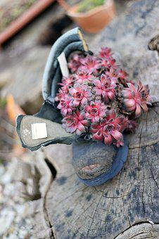 Succulent, Pink, Shoe, Old, Plant, Recycling, Botanical