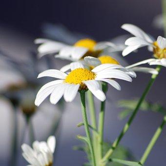 Flower, Denmark, Summer, Flowers, Have, Beautiful