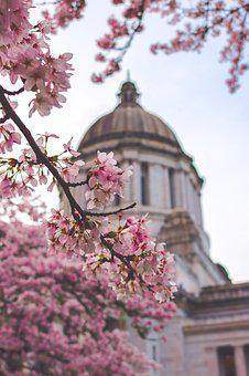 Capitol, Building, Washington, State, Spring, America