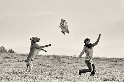 Man And Dog, Standing Dog, Weimaraner, Kite Flying