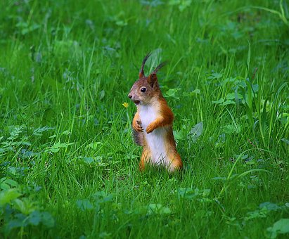 Squirrel, Park, Wildlife, In The Park, Animals