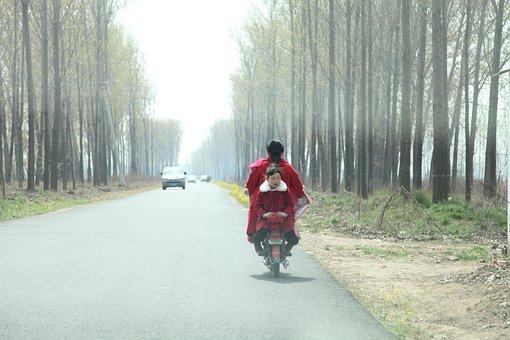 Ching Ming, Poplar, Road, Automotive, Asphalt