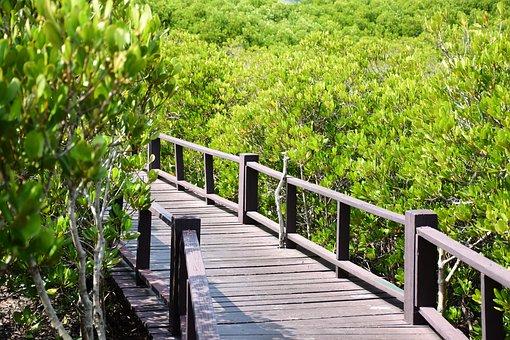 Bridge, Forest, Thailand, Mangrove Forest
