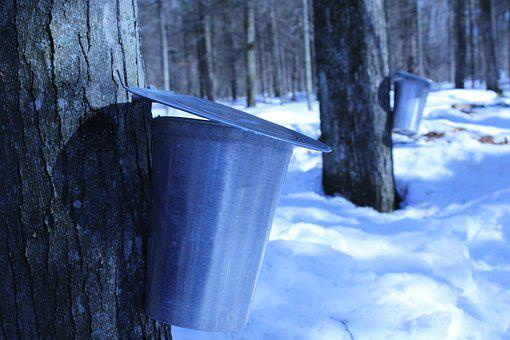 Sirop, Maple, Sugar, Syrup, Canada, Wood, Quebec