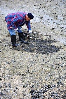 Clam Digger, Clams, Beach, Shellfish, Digging, Ocean