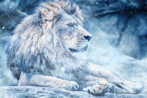 Lion, Snow, Lying Down, Art, Animal, Nature
