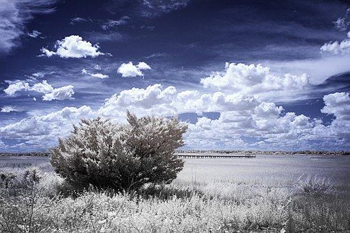 Infrared, Marsh Grass, Low Tide, Pier, Juniper Bush