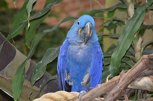 Parrot, Blue, National Aviary, Pittsburgh, Pa, Bird