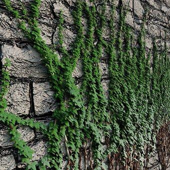 Nature, Wall, Plant, Brambles, Flowers, Green, Tree