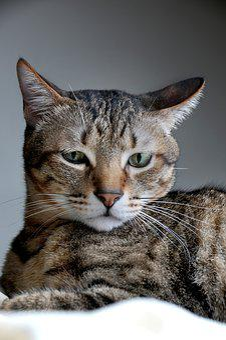 Cat, Pet, Positive, Note Reviews