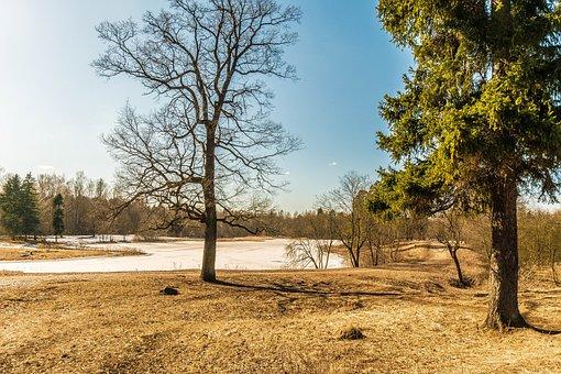 Spring, Gatchina, Beauty, Nature, Landscape, Russia