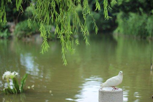 Pigeon, Lake, Willow