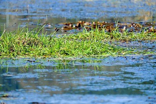 Grass, Water, Blue, Mirroring, Lake, Bank, Nature